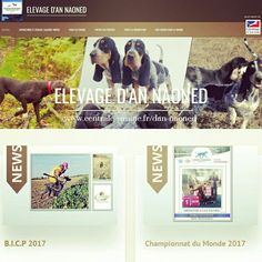 Nouveauté 2018 📣 L'Elevage d'An Naoned est désormais accessible sur le nouveau Portail de la Société Centrale Canine 🐕 (French Kennel Club 🇫🇷) 💻 www.centrale-canine.fr/dan-naoned  #dog #chien #hund #cani #pet #discover #kennelclub #centralecanine #bassetbleudegascogne #bbg #breed #breeder #braqueallemand #germanshorthairedpointer #gsp #chasse #hunting #jagd #oxota #dogshow #dogpics #dogsoftheday #doglovers #new