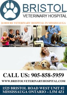 Bristol Veterinary Hospital is one of the most Prestigious 24 Hours Veterinary Hospital in Mississauga. that provides 24 hours emergency services for your beloved pets. We have a team very skilled and experienced veterinarians who can take care of your pets and help them to recover completely from their illness. Call Us for more info: 905-858-5959 Veterinary Services, Veterinary Care, Vet Clinics, Veterinarians, Pet Health, Take Care Of Yourself, Bristol, A Team, Your Pet