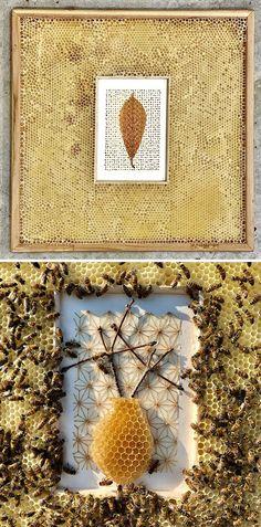 Bee Honeycomb, Colossal Art, Mixed Media Artwork, Ava, Architecture, Frame, Design, Home Decor, Arquitetura