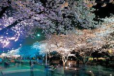 벚꽃축제 야경