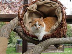 Ein Weidenkorb, mit Jutesack ausgefüttert, ergibt im handumdrehen einen gemütlichen Kuschelplatz für deine Katze. Das kann jeder, es braucht kein Geschick.