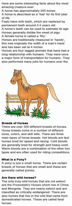 Horse fun facts for kids http://firstchildhoodeducation.blogspot.com/2013/10/horse-fun-facts-for-kids.html