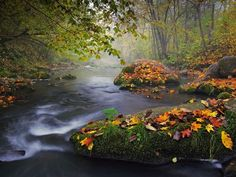 Autumn Landscape by  Olegas Kurasovas