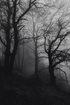 Tree black and white photography dark forest 18 Ideas Dark Photography, Black And White Photography, Landscape Photography, Wedding Photography, Paradis Sombre, Creepy Woods, Spooky Woods, Dark Paradise, Brown Aesthetic