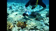 Snorkeling in Sharm El Sheikh - El Faraana
