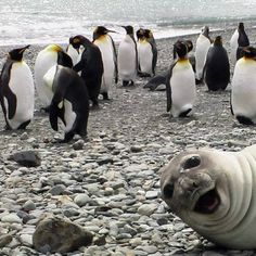 Oh, hi there!  Do you have a moment to talk about seals of approval?