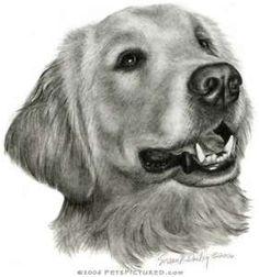 Golden Retriever Portrait - Original pencil drawing - Prints, apparel ...