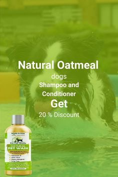 Our Oatmeal Dog Shampoo And Conditioner is recommended by Vets and Specially formulated for pets with allergies to food, grass and flea bites. Can be used for dogs, cats, ferrets and rabbits.. There isNO ALCOHOL, NO SULPHATES, NO ADDED COLORS & NO HARSH CHEMICALS.#homemadeshampoo #shampoo #dogs Homemade Dog Shampoo, Natural Dog Shampoo, Shampoo And Conditioner, Healthy Hair, Allergies, It Works, Dog Cat, Alcohol, Ferrets
