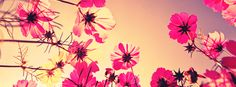 Click to get this pink beautiful flowers facebook cover photo