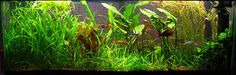 Walstad Style Planted Tank