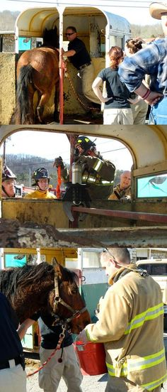 Tennessee firefighters and animal control officers rescue a horse stuck in a trailer. | Shared by LION