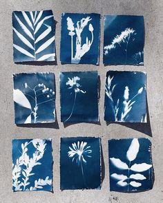 How to DIY Cyanotypes at Home - Stuck at Home with Justine — Justine Silva Linda Ronstadt, Cyanotype Process, Sun Prints, Home Stuck, Shibori, Origami, Damier, Art Inspo, Printmaking