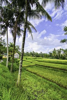 Ubud Countryside