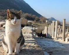 Un gato de Efeso. #turquiaturismo #turquia #efeso #turismo #viajes #viaje #viajero #viajeros #instaviajes #instaturismo #instatravel #travel #fotodeldia #foto #picoftheday #photooftheday #gato