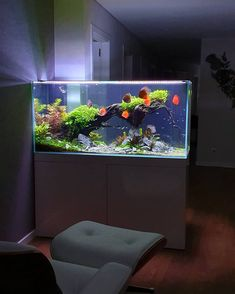The Hobby Of Saltwater Aquarium Fishkeeping Quite simply, a saltwater aquarium is designed to offer saltwater marine life with a familiar and contained Aquarium Setup, Coral Aquarium, Aquarium Design, Saltwater Aquarium, Aquarium Fish Tank, Planted Aquarium, Fish Tanks, Amazing Aquariums, Animaux