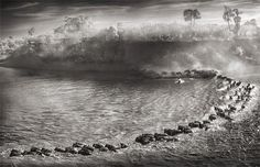 Beautiful black-and-white images of East African wildlife by the renowned fine   art photographer Nick Brandt..