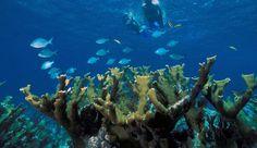 Bahía Vizcaíno, con el único arrecife vivo de coral de EE.UU., contaminada con tritio filtrado por una planta nuclear - http://verdenoticias.org/index.php/blog-noticias-contaminacion/160-bahia-vizcaino-con-el-unico-arrecife-vivo-de-coral-de-ee-uu-contaminada-con-tritio-filtrado-por-una-planta-nuclear