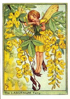 """""""The Laburnum Flower Fairy"""" by Cicely Mary Barker (from """"Flower Fairies of the Trees"""", first published in London by Blackie, 1940)"""