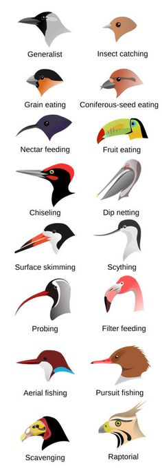 Types Of Birds And Name | Bird Beak - Bird Beaks