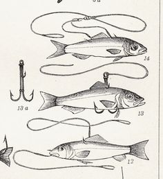 fish lithograph
