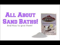 All About Sand Baths! Everyone with a hamster needs to watch this. You should use chinchilla bath sand not chinchilla dust or hamster dust bath Hamster Ideas, Hamster Stuff, Hamster Care, Animal Habitats, Hamsters, Chinchilla, Baths, Creatures, Youtube