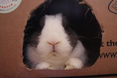 Disapproving in a box by Rosybunny
