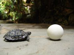 80-Year-Old Tortoise Hatches A New Baby. But That's Not Her Only Surprise...