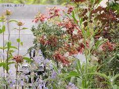「ラスティーセージ庭」の画像検索結果