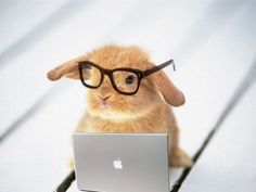 bunny with glasses - Google Search