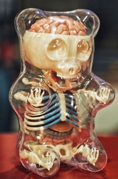 Anatomy of a gummy bear @Rhonda Franks This seems like something you would like. I think its funny!