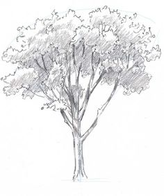 Learn how to draw trees in this simple step by step demonstration of the process of drawing an oak.