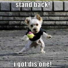 one for all the #Flyball puppies