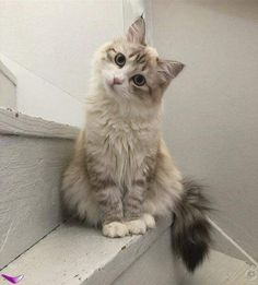 Cute Baby Cats, Cute Cats And Kittens, Cute Little Animals, Adorable Kittens, Cute Kitty, Cutest Kittens Ever, Baby Kitty, Kittens And Puppies, Baby Dogs