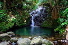 Riachuelo en el Bosque Toro Negro ~   Este Bosque se encuentra entre los municipios de Orocovis, Jayuya, Ponce, Juana Díaz y Ciales. (Fotografía Carlos Rodríguez)