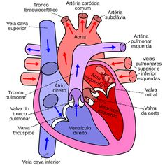 Science Matters: Body Systems: Cardiovascular System: Heart Diagram Roundup Check out the website to see Human Heart Diagram, Diagram Of The Heart, Human Body Diagram, Mitral Valve, Heart Anatomy, Human Anatomy And Physiology, Medical Coding, Nursing Notes, Nursing Care
