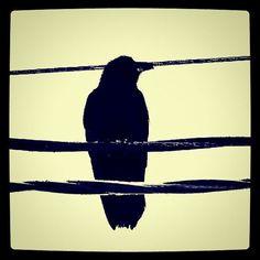 Razor's Raven Gothic Razor Wire Bird 4X4 Square by elinay on Etsy, $8.88