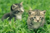 Adorable little kittens a great pet to adopt and own stock photo Cute Little Kittens, Cute Kittens, Greek Flowers, Kitten Wallpaper, Healthy Pets, Scroll Saw Patterns, Make You Smile, Pet Care, Baby Animals
