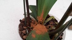 Cinnamon Mix for Fading Plants - Pflanzideen Diy Garden, Female Photographers, Photography Women, Garden Inspiration, Flower Arrangements, Cinnamon, Plants, Flowers Garden, 3d Printer