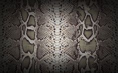wow a Snakeskin wall  a designers dream....GO CRAZY!!! the possibilities!