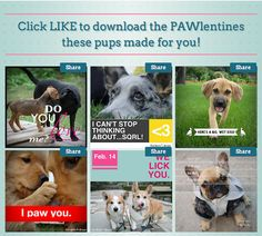 We've got some pawlentines for your secret crushes! Just select the 'Pawlentines' tab on our Facebook Fan Page: https://www.facebook.com/dailypuppy or click here: http://a.pgtb.me/2c7NtX