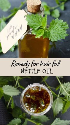 This mineral-rich nettle oil is a powerful remedy with a wide spectrum of uses from easing stiff joints to scalp and hair treatment. #nettleoil, #nettleoilforhairloss, #oilsforhairgrowth #hairoil Natural Hair Journey Tips, Natural Hair Care, Oil For Hair Loss, Healing Herbs, Medicinal Herbs, Herbal Remedies, Natural Remedies, Beauty Care, Beauty Hacks