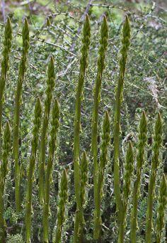 un blog di rassegna completa di erbe spontanee commestibili