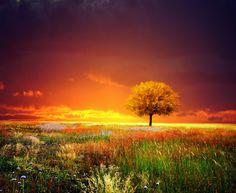 sunset tree I by kokoszkaa.deviantart.com on @deviantART