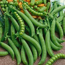 Tender Sweet Snap Pea | Snap | Peas | Vegetable Seeds | Jung Garden and Flower Seed Company