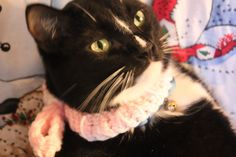 Valentine Pink and White Cat Collar featuring