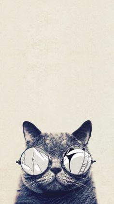 fond d'écran portable, photo blanc et noir avec chat rigolo aux lunettes de soleil rondes