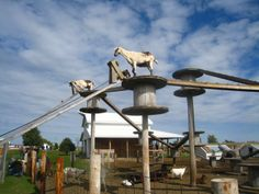 goats up high!! goat playground- #babygoatfarm