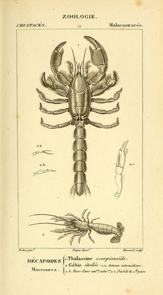 n554_w1150 | by BioDivLibrary
