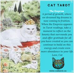 Monthly readings on my YouTube channel: www.youtube.com/c/cattarot Book your reading: www.cattarot.ca Love, Cat #tarot #tarotcards The Empress, Tarot Reading, Tarot Cards, Dream Big, Channel, Take That, In This Moment, Cats, Youtube