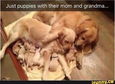 Picture memes — iFunny Just puppies with their mom and grandma. – popular memes on the s Cute Little Animals, Cute Funny Animals, Funny Cute, Cute Dogs And Puppies, I Love Dogs, Doggies, Funny Animal Memes, Funny Dogs, Cute Stories